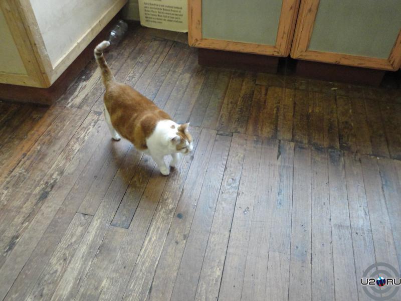 нэшвилльский кот