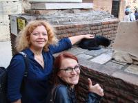 Нашли кису в Колизее