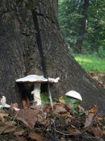 за грибами в лес я всё-таки не убежала